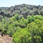 La disponibilidad del agua determina las propiedades funcionales de las comunidades leñosas