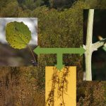 Los distintos órganos de la planta (hoja, tallo y raíz) funcionan de manera coordinada