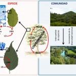 Tesis doctoral sobre rasgos funcionales de especies leñosas mediterráneas