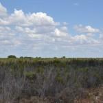 Investigadores del IRNAS analizan cómo responde el matorral de Doñana ante un evento climático extremo