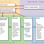 New framework for soil-related ecosystem services