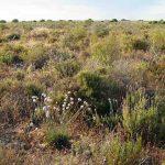 Estabilidad y diversidad funcional de la vegetación en un clima cambiante