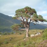 Changes on the distribution limits of tree species in response to global warming