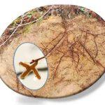 Rasgos funcionales de las raíces en bosques y matorrales mediterráneos