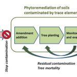 Medidas para recuperar suelos contaminados: estudio de caso del Guadiamar