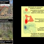 Científicos del IRNAS prueban el efecto de las cubiertas vegetales (mulching) en la recuperación del suelo después de un incendio forestal